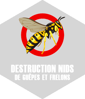 Destruction de nid frelons Toulouse